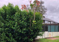 Camphor Dr, Spring Hill FL