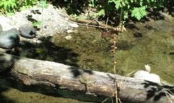 Tiller Trail Hwy, Days Creek OR