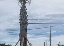 Beulah Ave, Panama City FL